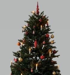 Termin für Weihnachtsbaumentsorgung